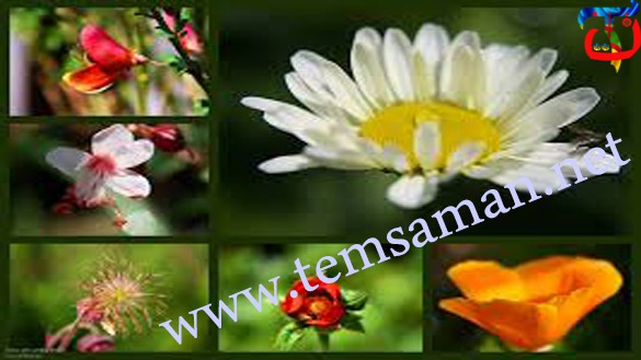 الفرق بين الوردة والزهرة